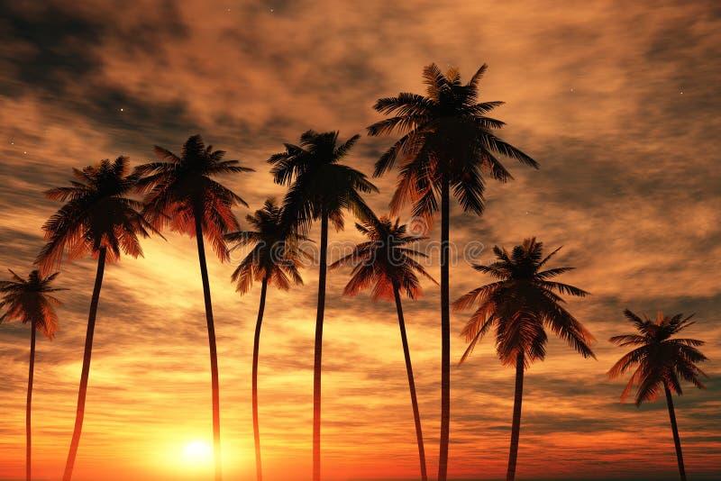 Tropische palmen bij zonsondergang stock afbeelding