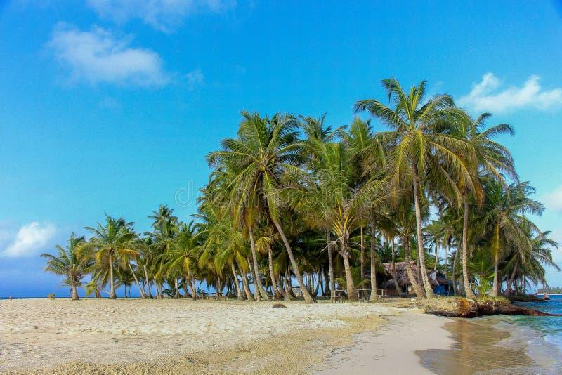 Tropische Palmen in Caraïbisch eiland stock foto's