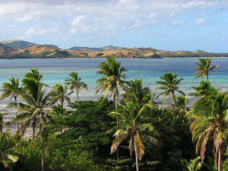 Tropische Palmen in den Yasawa Inseln, Fidschi lizenzfreies stockbild