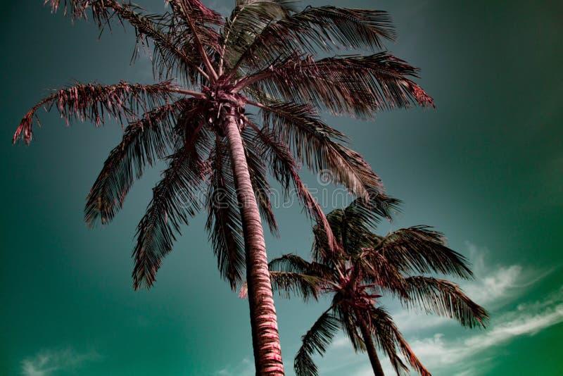 Tropische palmen met groene hemel stock foto's