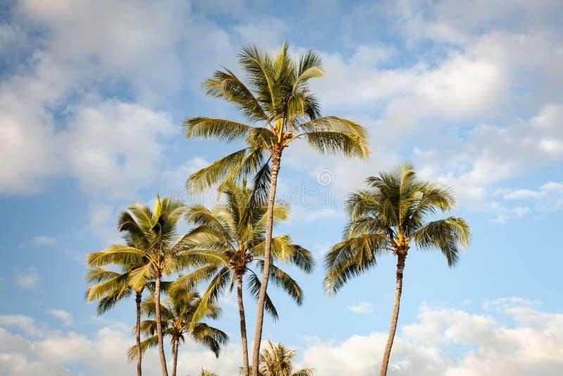 Tropische Palmen und blauer Himmel stockfoto