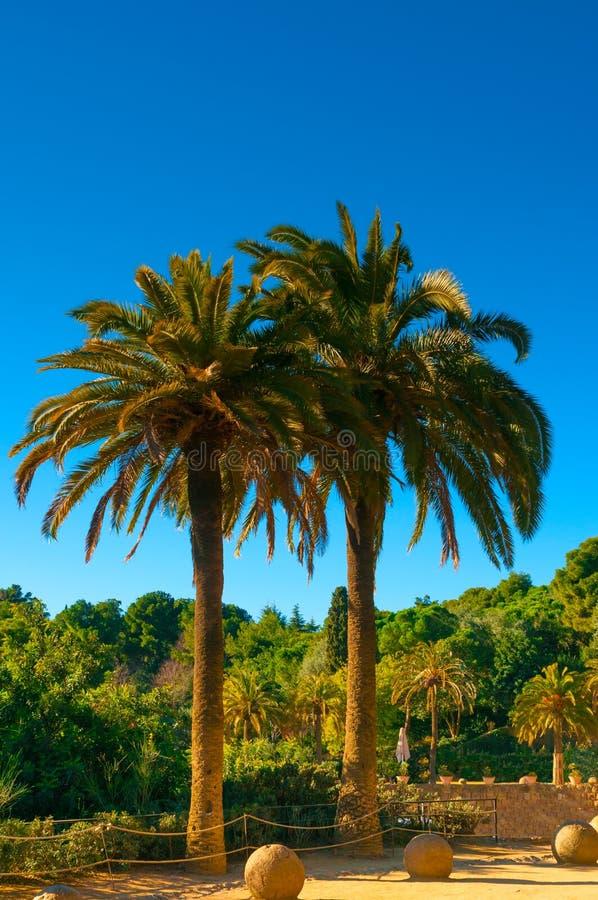 Tropische Palmen unter blauem Himmel stockfoto
