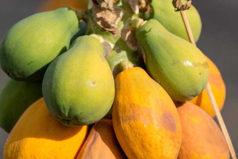 Tropische papajavruchten die op papajaboom hangen, exotisch voedsel stock afbeeldingen