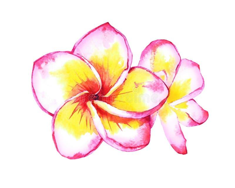 Tropische plumeriaillustratie royalty-vrije illustratie