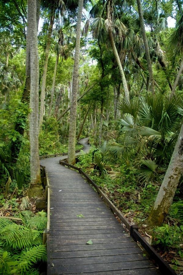 Tropische Promenade royalty-vrije stock foto's
