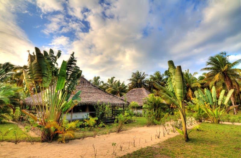 Tropische Rücksortierung stockfotos