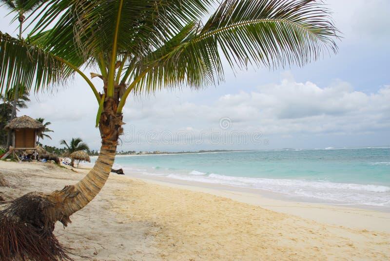 Tropische Rücksortierung - Careibas stockfotografie