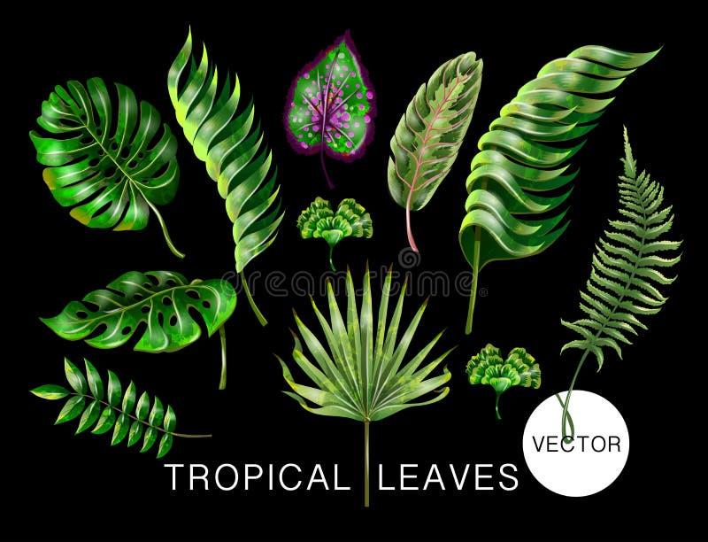 Tropische realistische palm, monstera, banaan en varenbladeren Reeks op zwarte achtergrond wordt geïsoleerd die Vector illustrati royalty-vrije illustratie