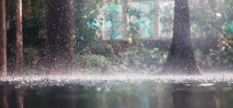 Tropische regen royalty-vrije stock foto