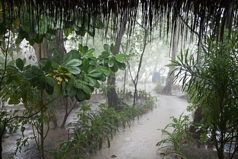 Tropische regen met weg door nevelig park royalty-vrije stock foto