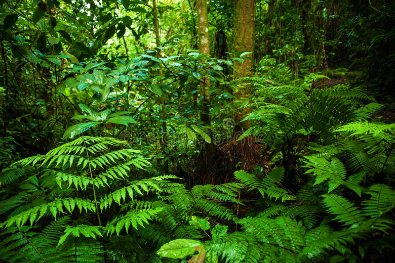 Tropische Regenwald-Landschaft stockfotografie