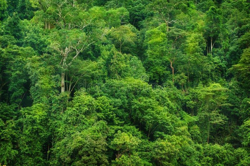Tropische Regenwaldansicht stockbild