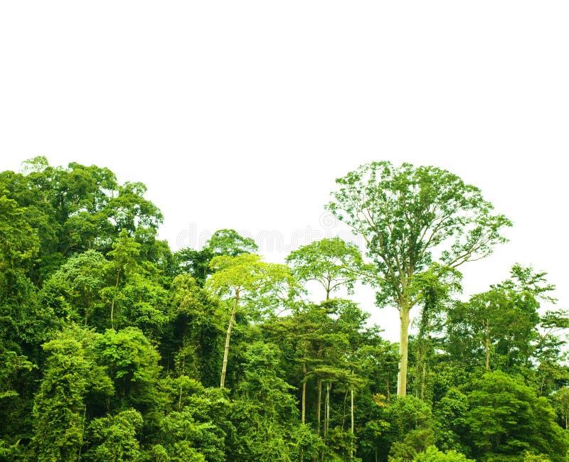 Tropische Regenwaldlandschaft lokalisiert stockfotografie