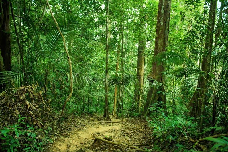 Tropische Regenwaldlandschaft mit Weg stockbilder