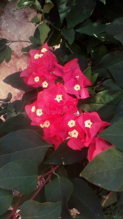 Tropische roze bloem vector illustratie