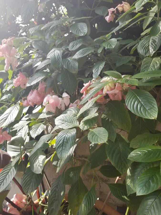Tropische roze bloemen royalty-vrije stock foto's