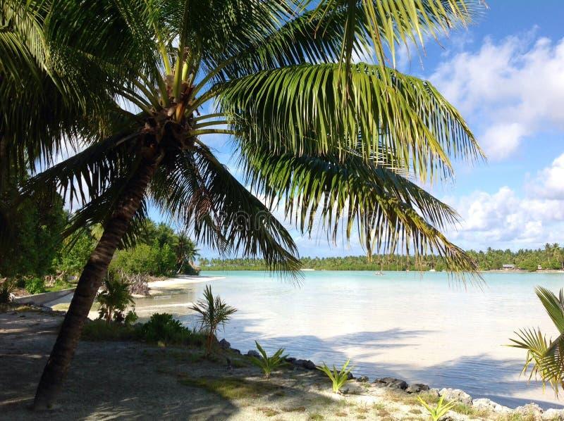 Tropische scène in Fiji met palmen in de zonsondergang door de oceaan stock foto's