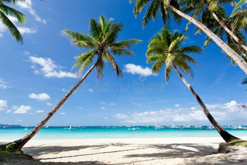 Tropische scène, Filippijnen royalty-vrije stock foto's