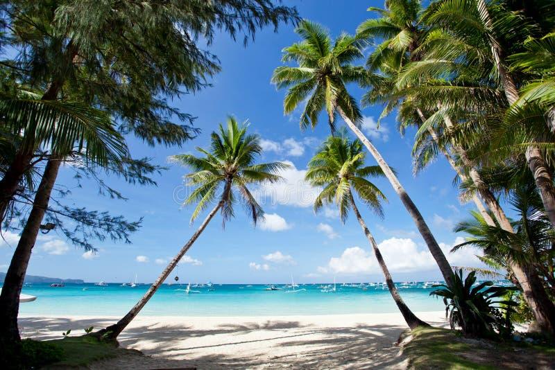 Tropische scène, Filippijnen stock foto's