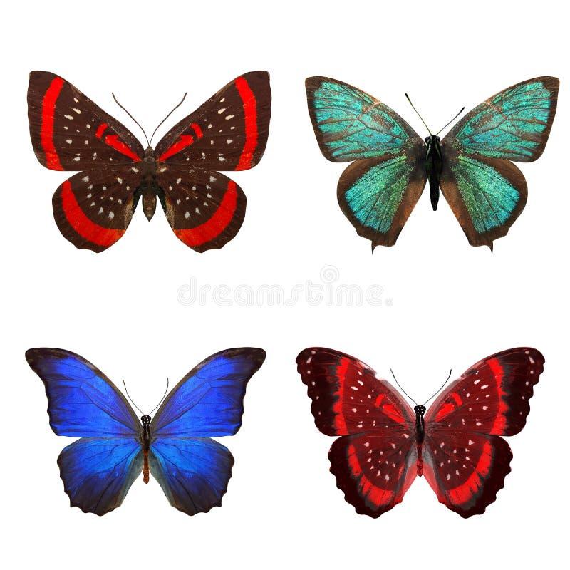 Tropische Schmetterlinge lokalisiert auf Wei? lizenzfreie abbildung