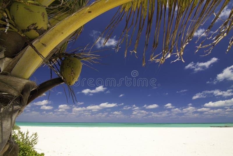 Tropische Sereniteit - Isla Pasion Cozumel Mexico stock afbeeldingen