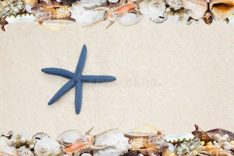 Tropische shells ANS zeester op een strand stock foto