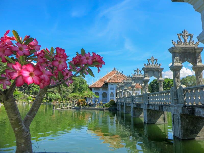 Tropische siertuin met groot zwembad Jonge plant roze frangipani Cascadeterrassen met vegetatie Reflectio royalty-vrije stock afbeelding