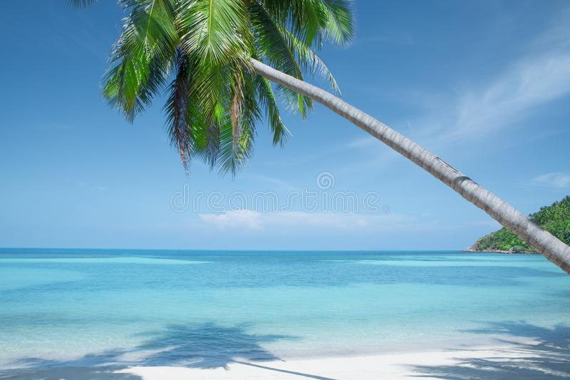 Tropische Site lizenzfreies stockbild