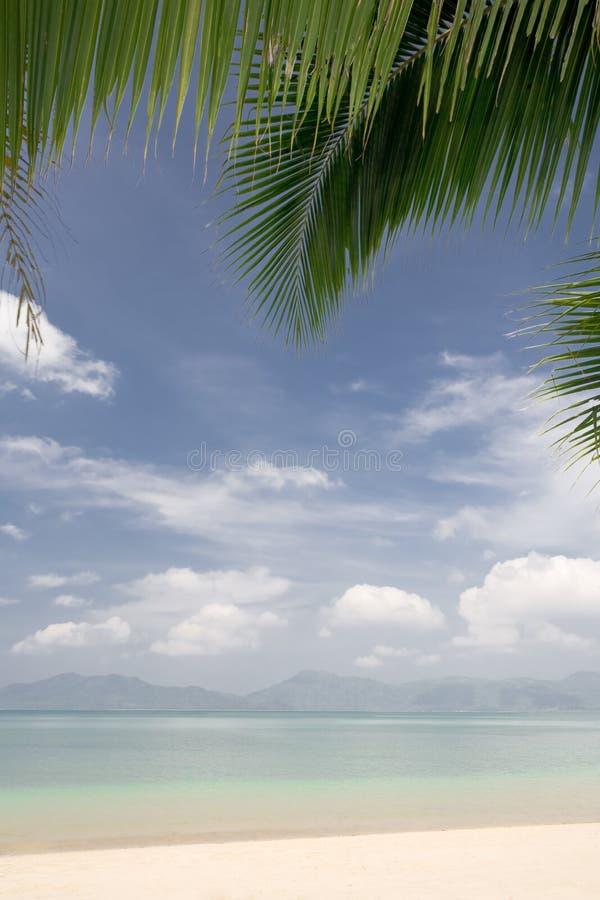 Tropische Site stockbilder