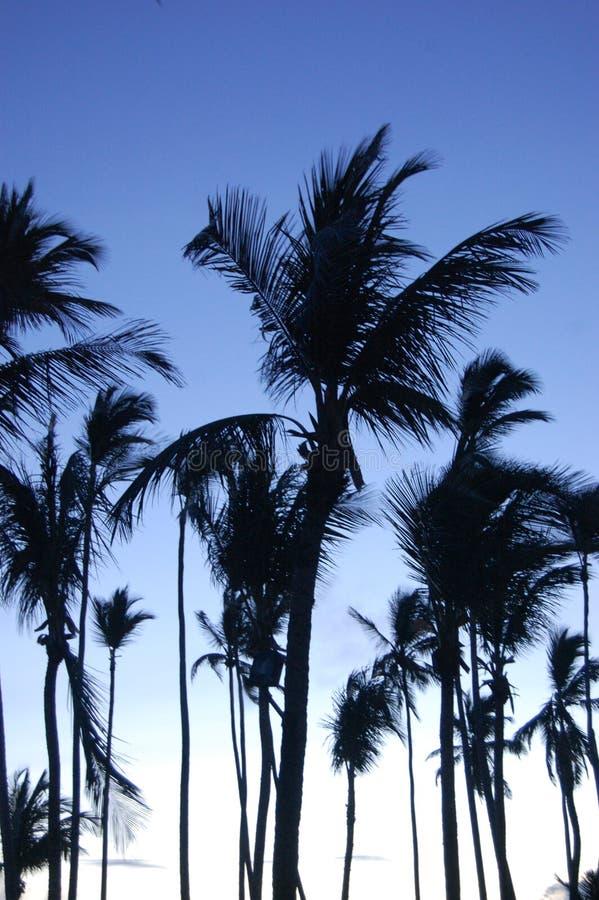 Tropische Sonnenaufgang-Palmen lizenzfreie stockbilder