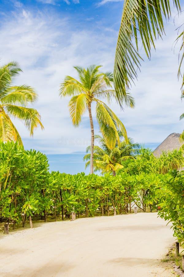 Tropische Straße, weißer Sand und Dschungellandschaft, Palmen und Mangrovennatur stockfotografie