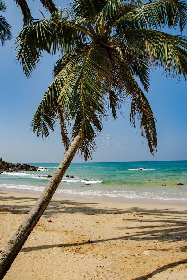 Tropische Strand en overzees met palm in Mirissa in Sri Lanka royalty-vrije stock foto