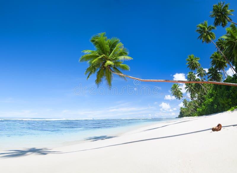 Tropische Strand-und Kokosnuss-Bäume lizenzfreie stockbilder