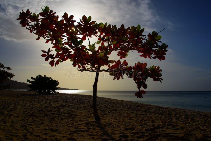 Tropische strandboom bij zonsondergang royalty-vrije stock foto's