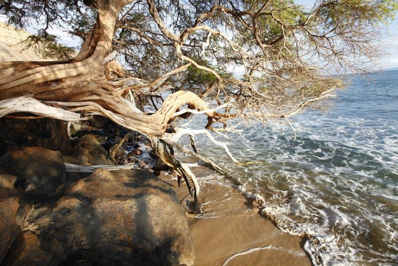 Tropische Strandinsel lizenzfreie stockbilder