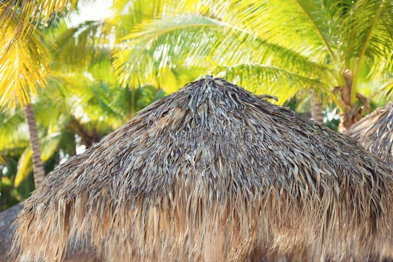 Tropische Strandschutzdach- und -palme, die im heißen Sonnenschein sich aalt stockfotos