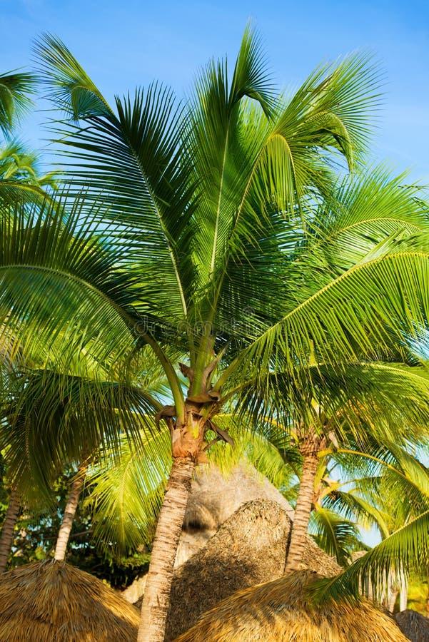 Tropische Strandschutzdach- und -palme, die im heißen Sonnenschein sich aalt lizenzfreie stockfotografie
