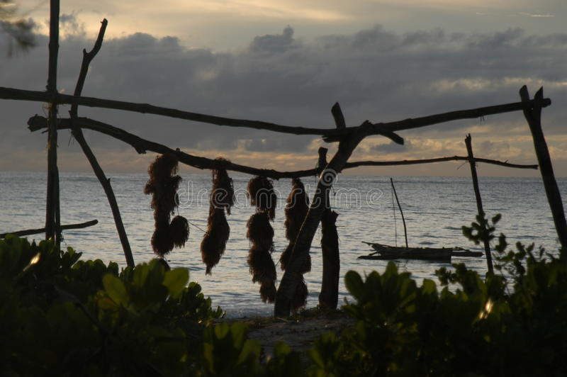 Tropische strandsilhouetten stock foto