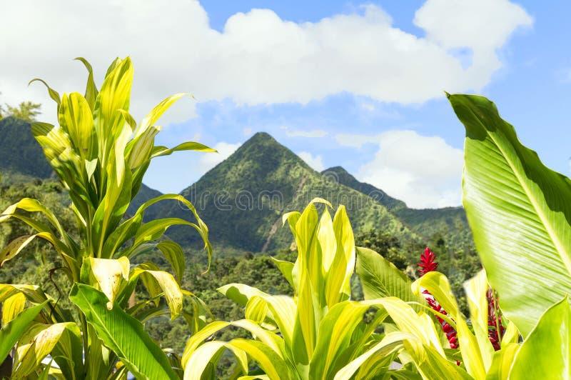Tropische Szene von Martinique-Bergen, Berg Pelee im Hintergrund, Kleine Antillen lizenzfreie stockbilder