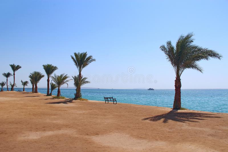Tropische toevlucht in Egypte Palmen die op kust groeien Mooi Zeegezicht stock foto's