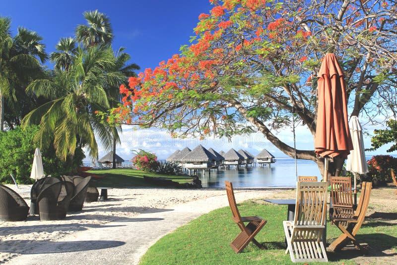 Tropische toevlucht Tahiti stock afbeeldingen