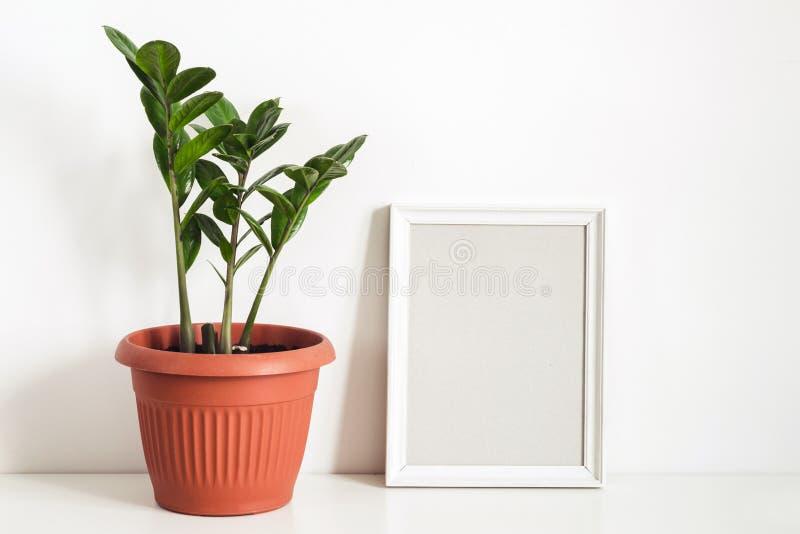 Tropische Topfpflanze Zamioculcas und leerer Fotorahmen gegen weiße Wand Skandinavisches Innenfragment lizenzfreie stockfotografie