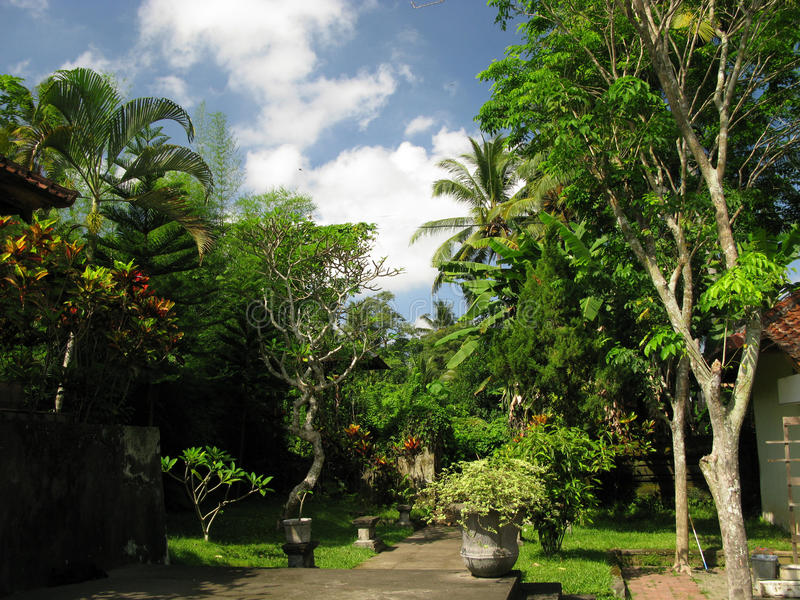 Tropische tuin stock afbeeldingen