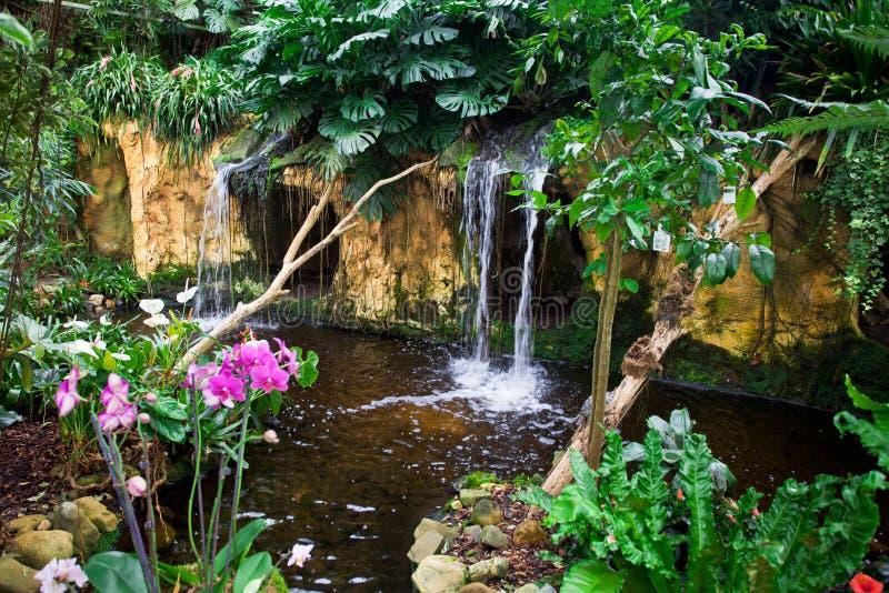 Tropische Tuin stock foto's