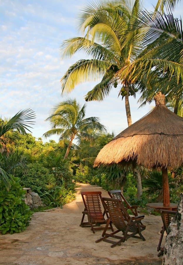 Tropische tuin stock foto