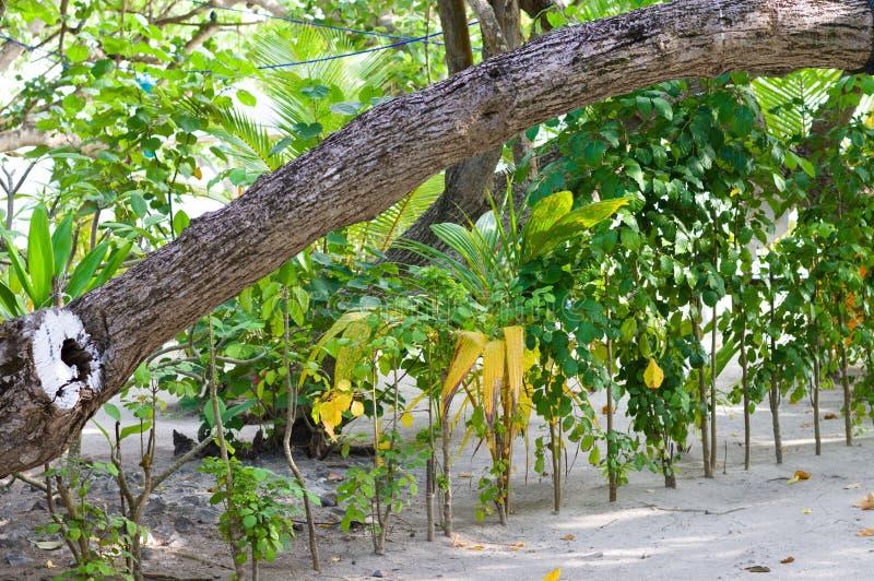 Tropische tuin in het zand royalty-vrije stock afbeelding