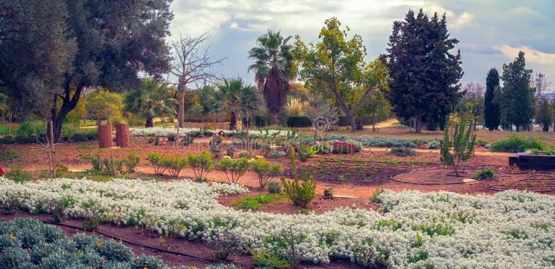 Tropische tuin met bloemen, cactus en palmenboom royalty-vrije stock foto