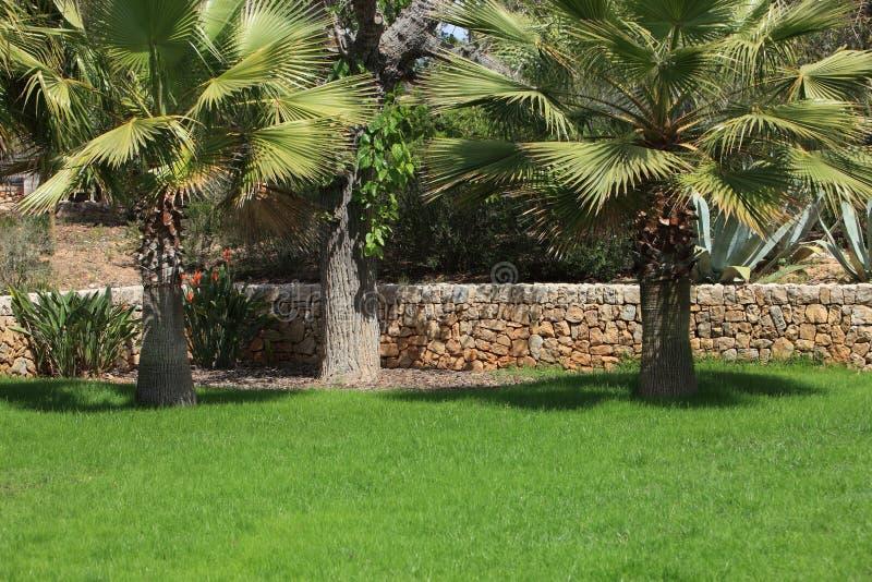 Tropische tuin met palmen royalty-vrije stock afbeeldingen