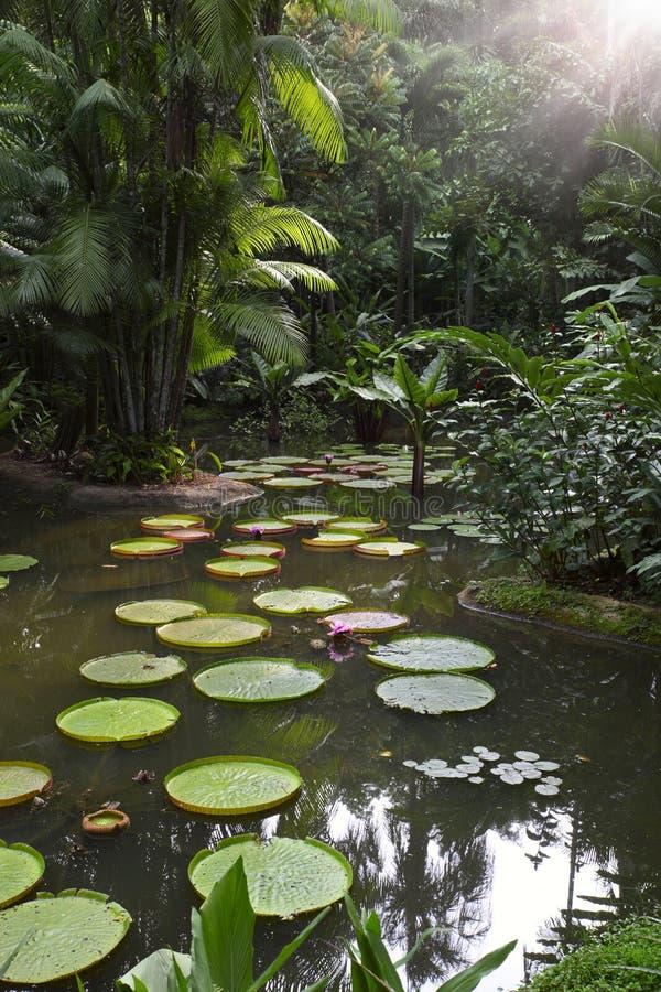 Tropische tuin met reus waterlily royalty-vrije stock foto