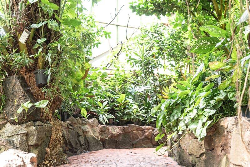 Tropische tuindecoratie met installaties, bloemen, en bomen - de manier van de weggang in serre royalty-vrije stock foto
